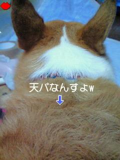 c0134720_165894.jpg