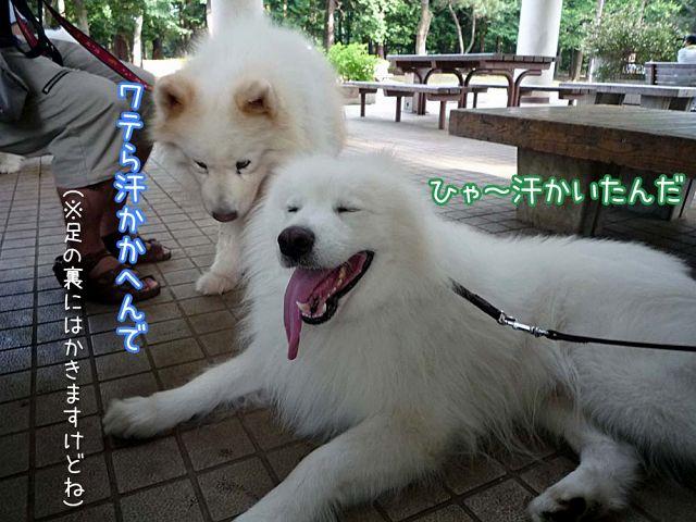 大阪から 「いらっしゃ~い♪」_c0062832_18511117.jpg