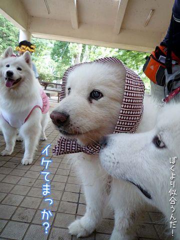 大阪から 「いらっしゃ~い♪」_c0062832_18513849.jpg