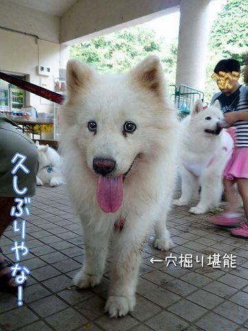 大阪から 「いらっしゃ~い♪」_c0062832_1851548.jpg