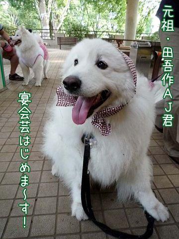 大阪から 「いらっしゃ~い♪」_c0062832_18523683.jpg