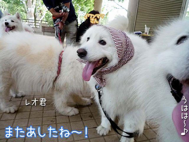 大阪から 「いらっしゃ~い♪」_c0062832_18525047.jpg