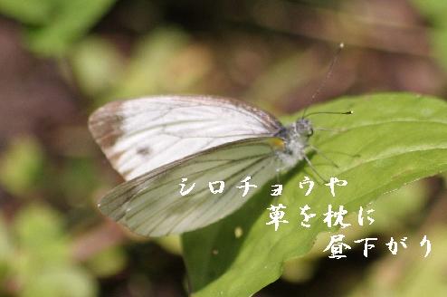 b0173244_2050967.jpg