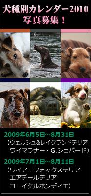 d0013149_10362678.jpg