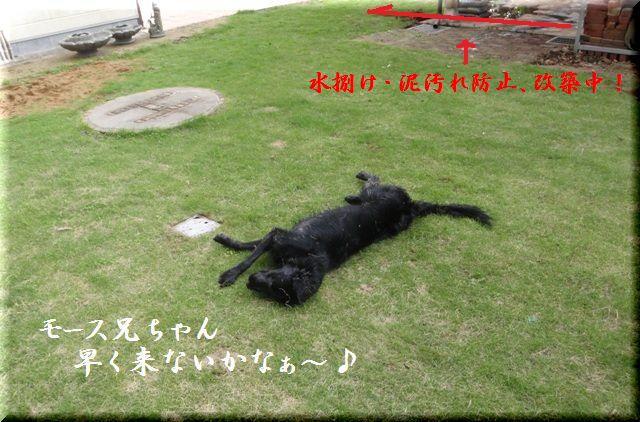 2009 モース兄ちゃんが遊びに来たよ~♪ _c0134862_21113140.jpg