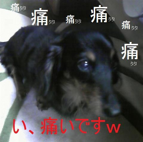 b0134402_17515438.jpg