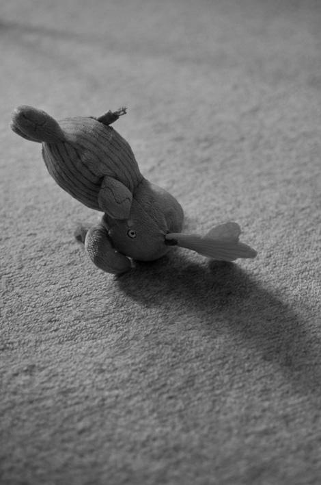 ひな鳥のから揚げとか逆立ちするゾウとか_b0133509_21354462.jpg