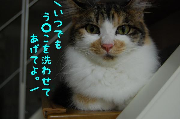 c0181639_1785811.jpg