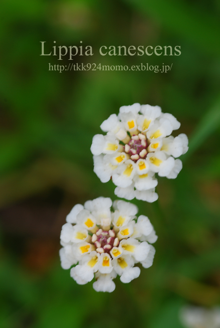 f0139642_22205511.jpg