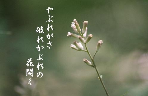 b0173244_20562011.jpg