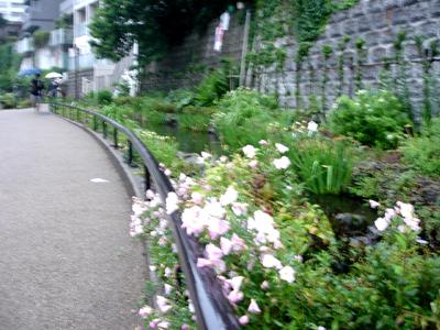 雨でも快適カモ 、遊歩道!_e0044855_1714735.jpg