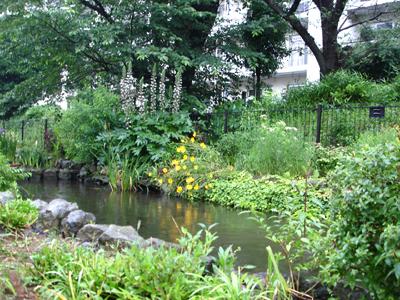 雨でも快適カモ 、遊歩道!_e0044855_172244.jpg