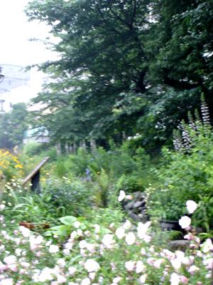 雨でも快適カモ 、遊歩道!_e0044855_176106.jpg