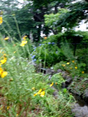 雨でも快適カモ 、遊歩道!_e0044855_176171.jpg