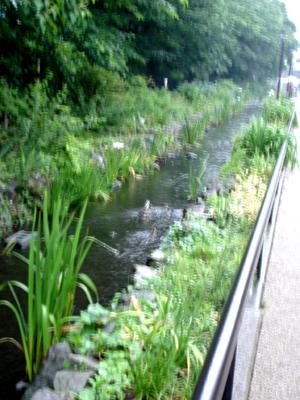 雨でも快適カモ 、遊歩道!_e0044855_1763420.jpg