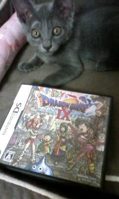 猫とDQIX_c0170061_18594132.jpg