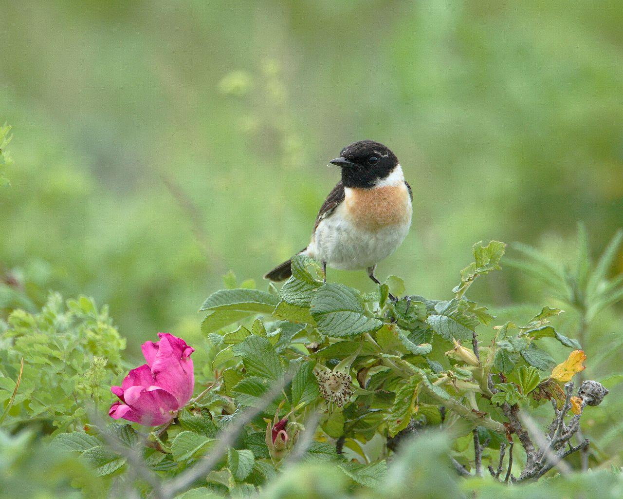 原生花園の野鳥達その2_f0105570_21364466.jpg