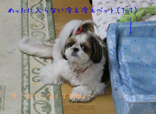 f0058277_021347.jpg