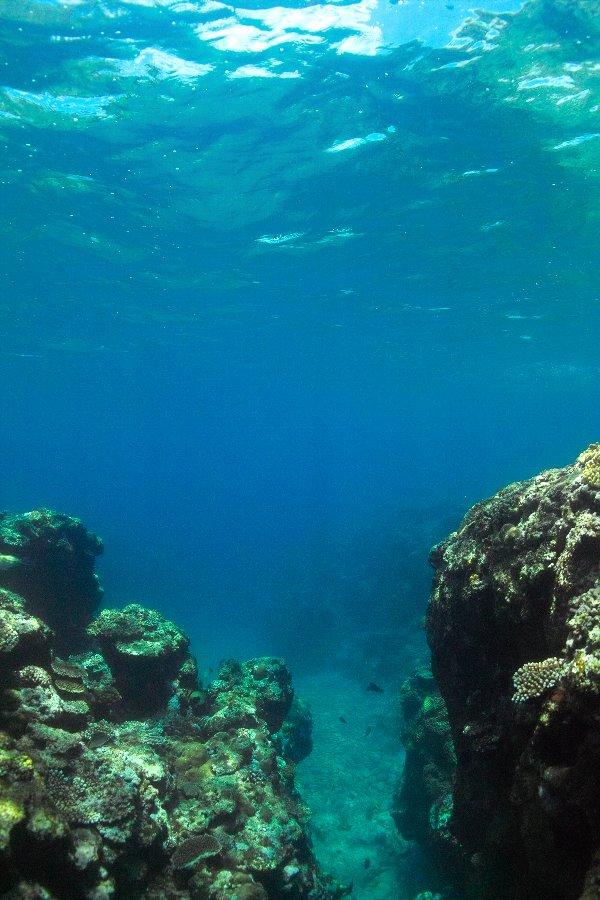 八重山 DP2的水中画像編_c0124795_16532960.jpg