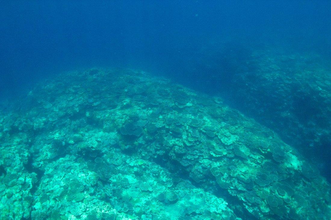 八重山 DP2的水中画像編_c0124795_16534320.jpg