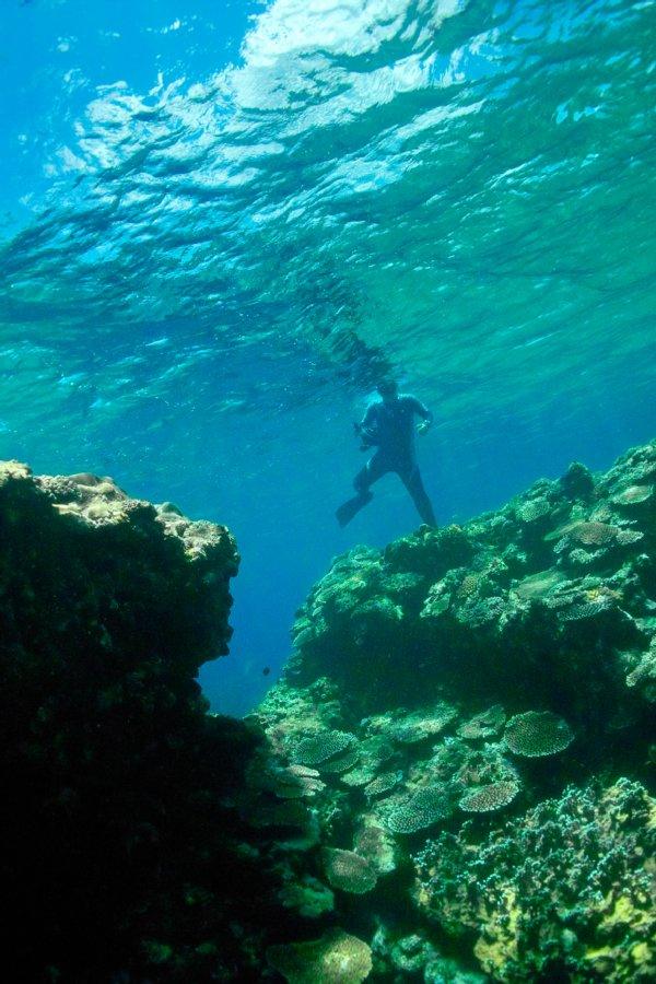 八重山 DP2的水中画像編_c0124795_1654457.jpg