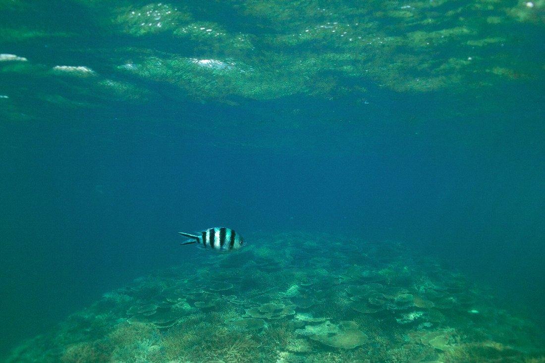 八重山 DP2的水中画像編_c0124795_16552867.jpg