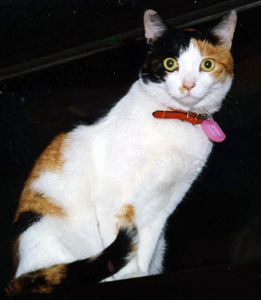 美猫だにゃ~_b0189509_1138541.jpg