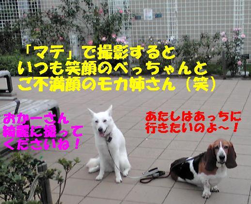f0121712_1559975.jpg
