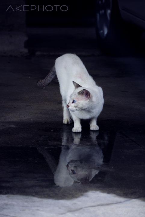 ガレージ猫_e0127416_21102680.jpg