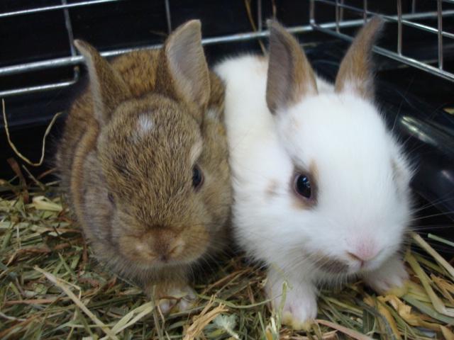 ウサギ・カメ・カエル_f0189122_11553560.jpg