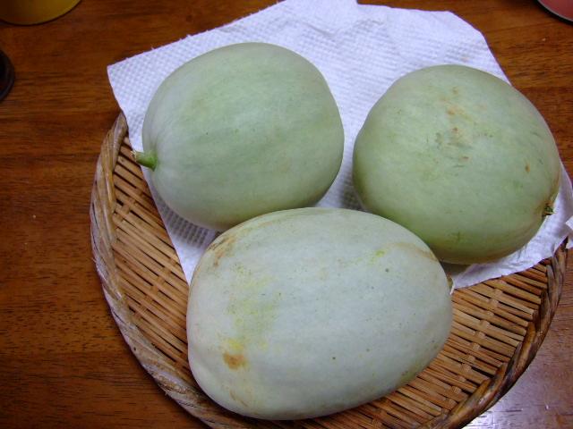 夏野菜,,,,,気分はキリギりス!_b0137932_19221963.jpg