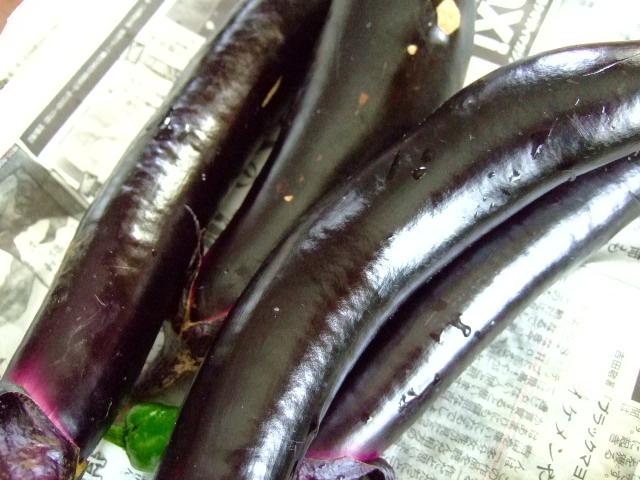 夏野菜,,,,,気分はキリギりス!_b0137932_1923572.jpg