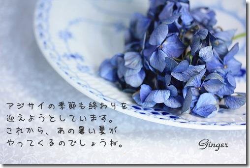 b0066947_1551264.jpg