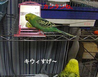 f0196665_0311869.jpg