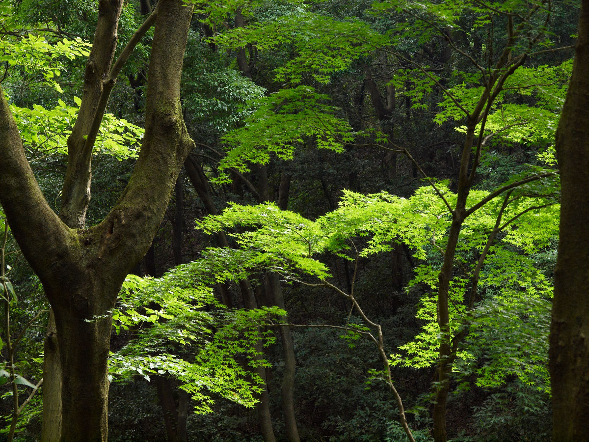 一転、森のサイドは_c0036985_16321713.jpg