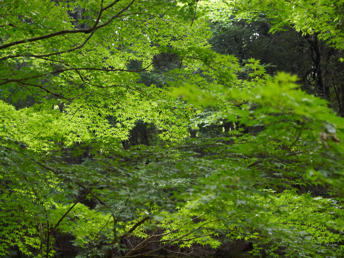 一転、森のサイドは_c0036985_16324242.jpg