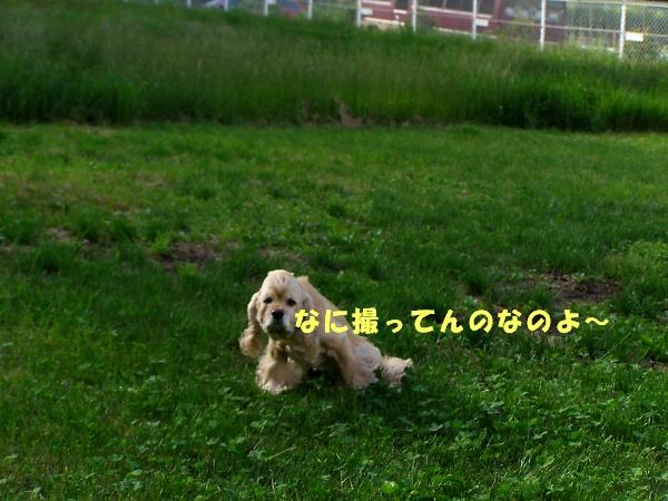 b0067012_2049551.jpg
