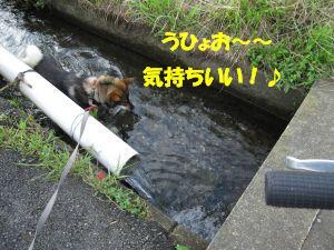 f0143123_20432654.jpg