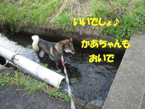 f0143123_20444319.jpg