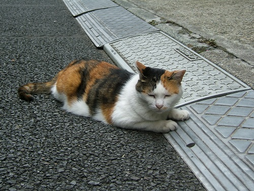 上野で会った猫_e0089232_2139617.jpg