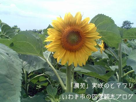 f0105342_1552515.jpg
