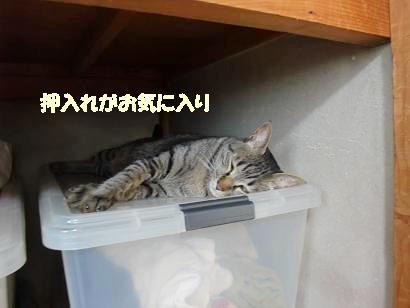 b0118850_1230143.jpg