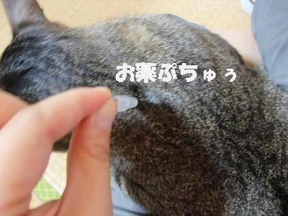 b0118850_1232189.jpg