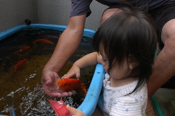 金魚すくい&海水浴_c0180460_1465373.jpg