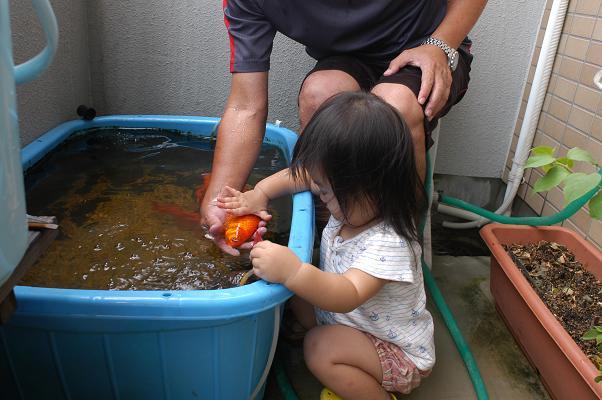 金魚すくい&海水浴_c0180460_1475060.jpg