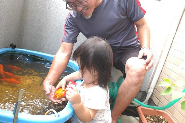 金魚すくい&海水浴_c0180460_1484335.jpg