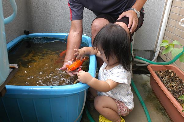 金魚すくい&海水浴_c0180460_1515319.jpg