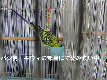 f0196665_016297.jpg