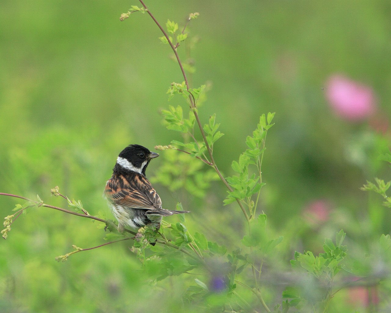 原生花園の野鳥達その4 今日の鳥は渋好み?_f0105570_2214569.jpg