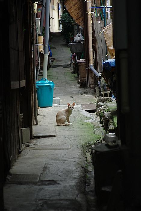 路地猫_c0152379_6491629.jpg
